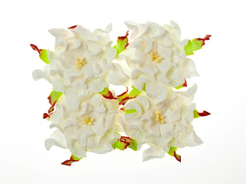 Gardenia 7cm 4 pcs in a pack WHITE