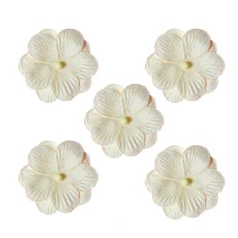 Pansies, a set of double flowers 5 pieces, white