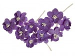 Cherry Blossom (10 piece set) Purple
