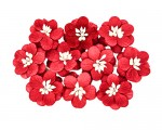 Cherry Blossom (10 piece set) Red