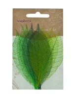 Skeleton leaves, set of 8 - 2 color mixed, Rubber Tree, greens